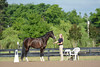 6.6.14 Palmetto Sport Horse Classic and Region 14 Hunter/Jumper Championships : 81 galleries with 1662 photos