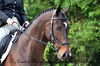 Windridge Farm Horse Trials 5.12.12 and 5.13.12 : 71 galleries with 2336 photos